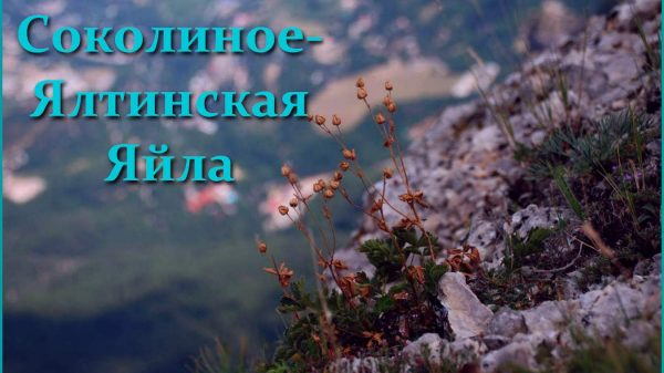 Соколиное-Ялтинская яйла 5 дней